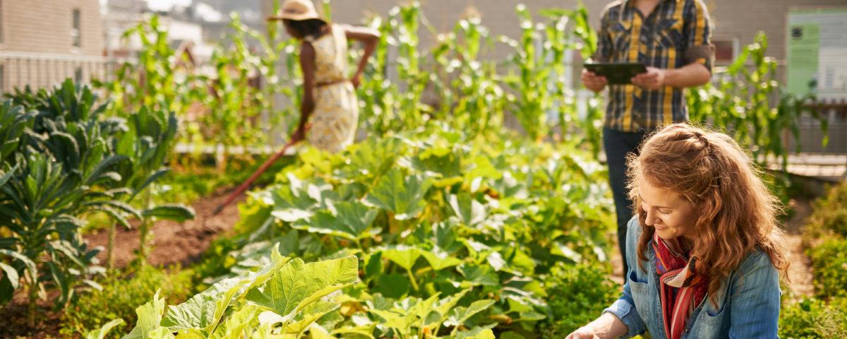 rooftop gardening