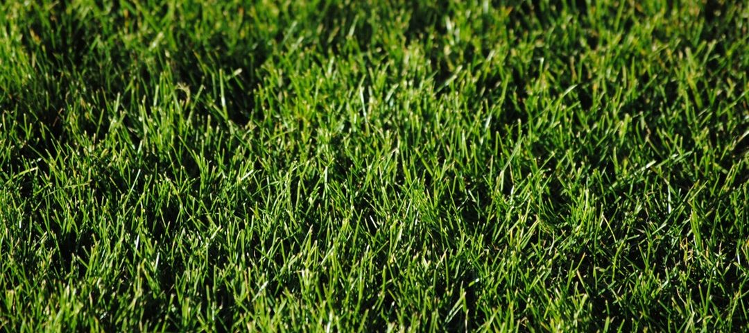 Going Greener What Is The Best Lawn Fertilizer For Your Home