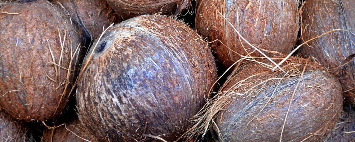 Coconut Husks for Gardeing