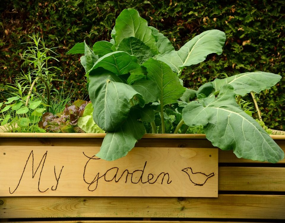 plant bed benefits