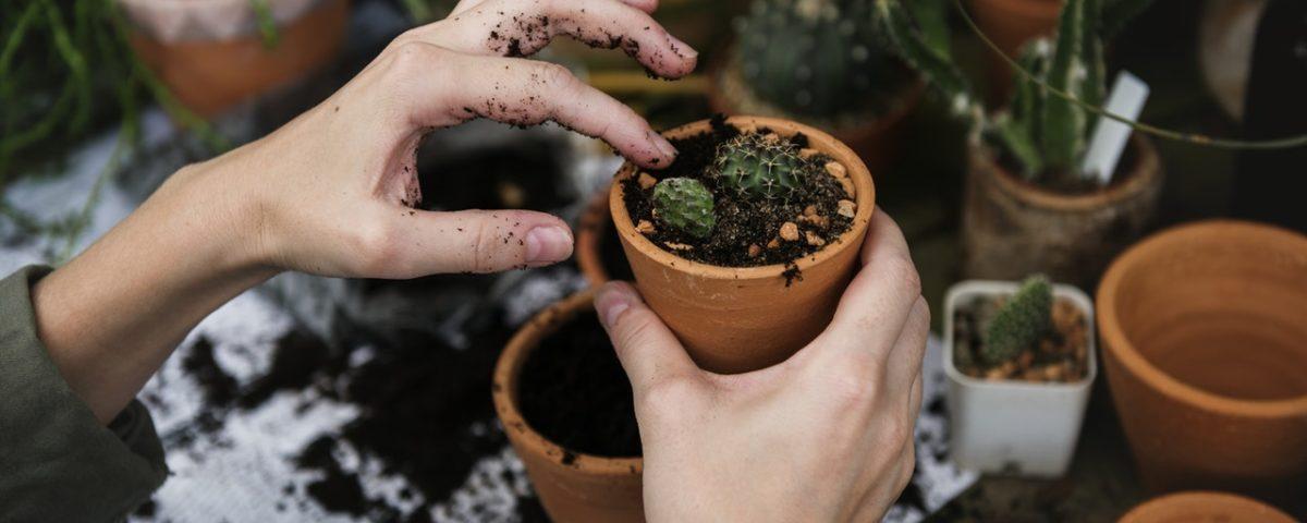 soil for houseplants